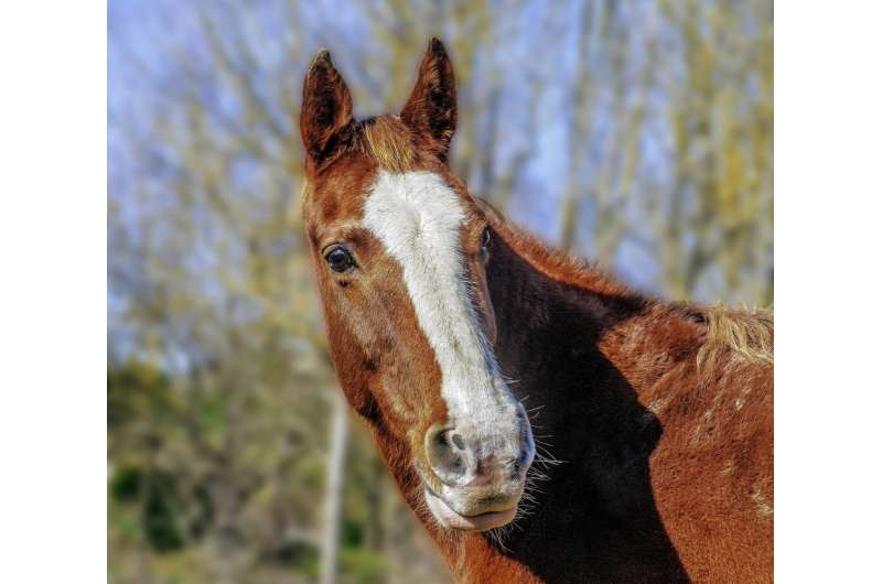 Veterans with PTSD may benefit from manualized Equine Assisted Therapy (EAT)